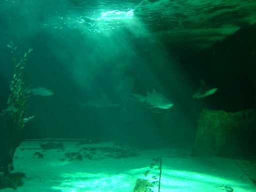 The Madrid aquarium as seen from below!