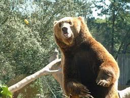 Madrid zoo has to include a bear as per the citys shield