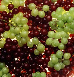 Madrid new year grapes